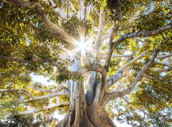 Trädfällning och trädvård